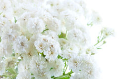 Beautiful background made by white flowers Royalty Free Stock Image