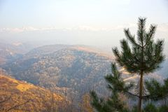 Beautiful background of mountains and fir. Mountains, background, fir Royalty Free Stock Photo
