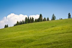 Beautiful background of natural landscape. Fir trees stand on a green hill in the background of beautiful clouds Royalty Free Stock Images