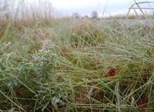 Autumn. Frozen yellow-orange grass with snowflakes. natural background of Russia royalty free stock photos