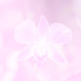 Beautiful Background with Orchid Flower in Pink Color Theme Stock Photography