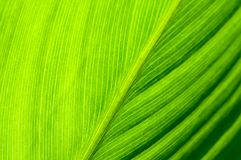 Background  and pattern of green tropical leave Royalty Free Stock Image