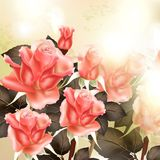 Beautiful  background with pink detailed roses Stock Images