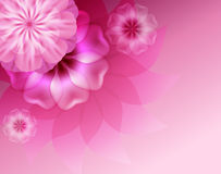 Beautiful background with pink flowers. Royalty Free Stock Image