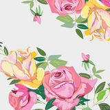 beautiful background of roses Stock Photo