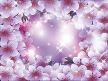Beautiful background with sakura blossom, Royalty Free Stock Image