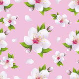 Beautiful background seamless pattern, sakura blossom. Beautiful light background seamless pattern with white sakura blossom - japanese cherry tree and flying Royalty Free Stock Photography