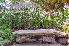 Beautiful background. Stone bench in front of many colors orchid,relax and peaceful Royalty Free Stock Images