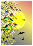 Beautiful background with sun, birds and tree silhouette Royalty Free Stock Photos