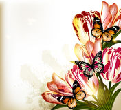 Beautiful background with tulips Royalty Free Stock Images