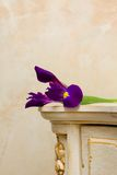Beautiful background - vintage wooden furniture. Interior detail and a flower Stock Photography