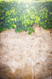 Beautiful background walls and plants Royalty Free Stock Image
