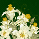 Beautiful Background with White Blooming Flowers Stock Image