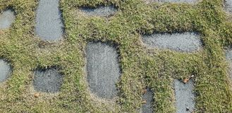 Green grass grows on the rocks background photo. Texture. royalty free stock image