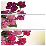 Beautiful backgrounds set with flowers Royalty Free Stock Photo
