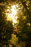 Beautiful backlight through the leaves of the trees royalty free stock photos