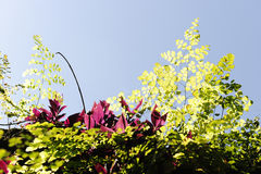 Beautiful backlit plants Royalty Free Stock Photos