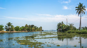 Beautiful backwater travel destinations of Kerala, India. River covered with green plants Stock Photo