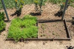 Beautiful backyard vegetable garden Stock Images