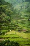 Beautiful Bali. Stock Images