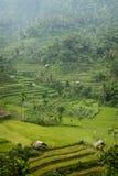 Beautiful Bali. Stock Photo