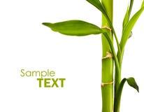 Beautiful bamboo Royalty Free Stock Photography