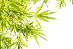 Beautiful Bamboo Border Stock Images