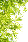 Beautiful Bamboo Border Royalty Free Stock Images