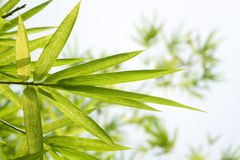 Beautiful Bamboo Border Stock Photography