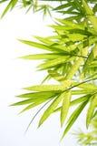 Beautiful Bamboo Border Royalty Free Stock Photo
