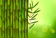 Beautiful bamboo border. Vector. Stock Photo