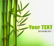 Beautiful bamboo border. Vector Stock Images