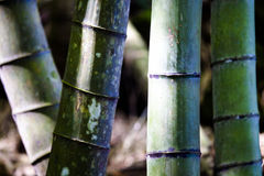 Beautiful bamboo branch in bamboo forest with beautiful green na. The beautiful bamboo branch in bamboo forest with beautiful green nature background Stock Photo