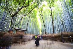 Beautiful Bamboo forest in Arashiyama at Kyoto - Bright Processi Stock Images