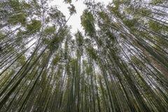 The beautiful bamboo forest of Arashiyama, Kyoto, Japan. Asia Royalty Free Stock Photo