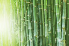 Beautiful bamboo forest, green nature background. Beautiful bamboo forest of the green nature background royalty free stock photography