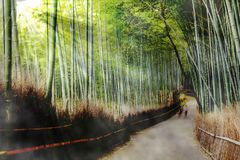 Beautiful of Bamboo Forest in Kyoto Japan. The Beautiful of Bamboo Forest in Kyoto Japan Stock Photos