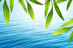 Beautiful bamboo frame with blue water Stock Images
