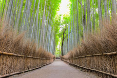 Beautiful Bamboo Grove of Arashiyama, Kyoto, Japan. Bamboo Grove of Arashiyama, Kyoto, Japan Royalty Free Stock Photos
