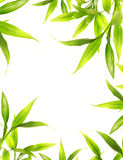 Beautiful bamboo leaves stock images