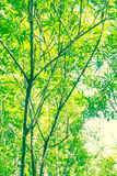 Beautiful Bamboo leaves in the summertime Royalty Free Stock Photo