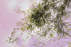 Beautiful bamboo leaves Royalty Free Stock Images