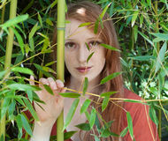 Beautiful Through Bamboo Royalty Free Stock Image