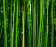 Beautiful bamboo texture background. Green asian plants. stock images