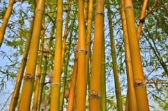 Beautiful bamboos in the sunlight Stock Photo