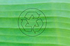 Beautiful banana leaf background and recycle logo. In the middle Royalty Free Stock Image