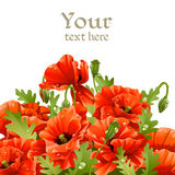 Beautiful banner with red poppies Royalty Free Stock Photography