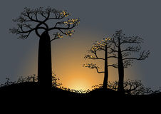 Beautiful Baobab trees at sunset Africa. Vector illustration Stock Image