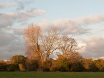 Beautiful bare tree in countryside autumn weather sunset sky fie Stock Photo