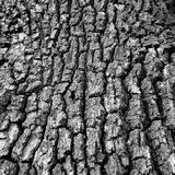 Beautiful bark Royalty Free Stock Photo